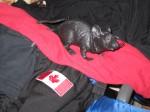 DeSilva the Rat